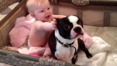 Crazy Dog having Fun with the Baby in his Crib!  Watch it here ► http://www.bterrier.com/?p=17088 - https://www.facebook.com/bterrierdogs