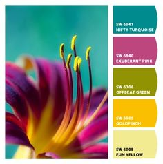 Lily colors from Chip It! by Sherwin-Williams, such beautiful & rich colors. Color Combinations For Clothes, Beautiful Color Combinations, Color Combos, Room Color Schemes, Colour Pallette, Color Psychology, Color Balance, Pantone Color, Color Theory