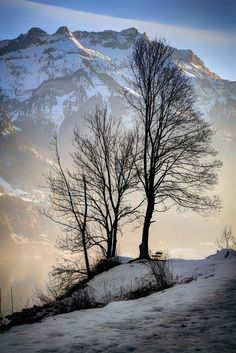 """Winter trees ~ Interlaken, Switzerland"" - photo by Davide Seddio Winter Photography, Landscape Photography, Nature Photography, Winter Scenery, Winter Trees, Winter Snow, Winter White, Winter Pictures, Cool Pictures"