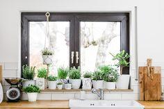 Mein essbarer Urban Jungle: ein Kräutergarten in der Küche – welche Kräuter geeignet sind, verrate ich euch im Post.