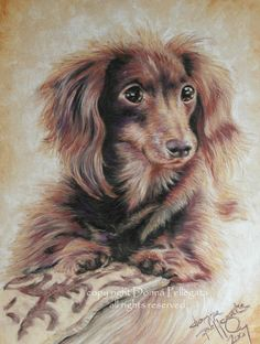 Longhaired Dachshund signed pastel art print by ArtQwerks on Etsy, $10.00