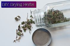 DIY: Drying Herbs