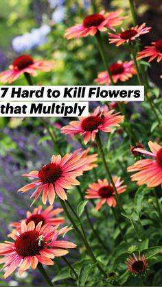 Cut Flower Garden, Flower Farm, Flower Beds, Butterfly Garden Plants, Small Flower Gardens, Flower Garden Plans, Flower Garden Design, Flower Gardening, Shade Garden Plants