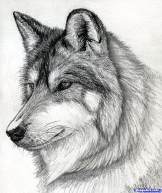 Wolf Drawing (3)