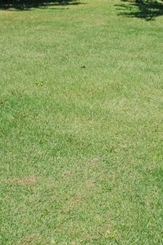 Keep your lawn healthy and looking its best with proper fall lawn care.