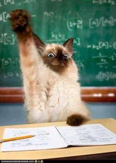 Ooh-ooooh! Mr. Kotter! Mr. Kotter!❤️