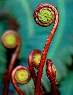 Fiddlehead fern, I can see this flora being incorporated into a fabric print.