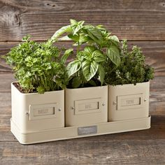 Herb Pot with Tray #williamssonoma