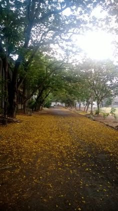 Beautiful green lane next to the management college JDBIMS within the Juhu campus of SNDT Women's University.