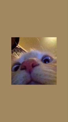 icon wallpaper iphone shelves / icon wallpaper iphone , icon wallpaper iphone shelves , icon wallpaper iphone 7 plus , icon wallpaper iphone backgrounds , icon wallpaper iphone wallpapers Iphone Wallpaper Cat, Tier Wallpaper, Funny Cat Wallpaper, Animal Wallpaper, Cute Cartoon Wallpapers, Disney Wallpaper, Iphone Backgrounds, Iphone Wallpapers, Cute Cat Memes