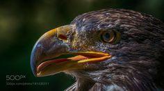 Bird by gjzarka #animals #animal #pet #pets #animales #animallovers #photooftheday #amazing #picoftheday
