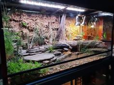 Great Pics Reptile Terrarium gecko Strategies No doubt that which has a animal may bring unknown joy to help another person's life. Any time most of the peo. Terrariums Gecko, Decor Terrarium, Turtle Terrarium, Terrarium Reptile, Reptile House, Reptile Room, Reptile Cage, Vivarium, Paludarium