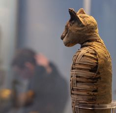 #mummy of a #cat #britishmuseum #london #londoner #londonlife #history #travelpics #pictureoftheday #travelblogger #streetphotography #travelgram