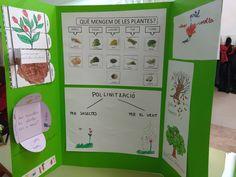 Lapbook de les plantes, projecte de les plantes. Plantas. Naturaleza, Insects, Plants, 1st Grades
