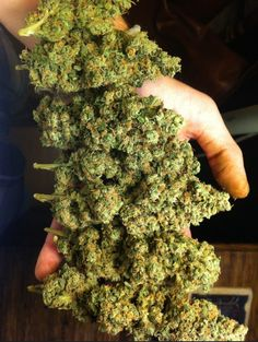 .:.:.:.:.:.KUSH.:.:.:.:.:.  Legalize It, Regulate It, Tax It!  http://www.stonernation.com Follow Us on Twitter @StonerNationCom #stonernation