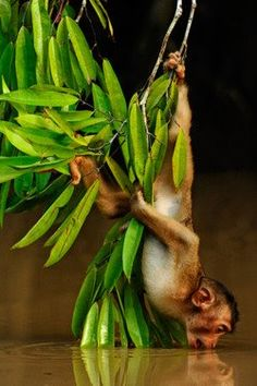 """Monkey. See Over 2500 more animal pictures on my Facebook """"Animals Are Awesome"""" page. animals wildlife pictures nature fish birds photography"""