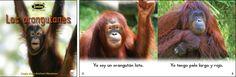 Los orangutanes—by Claire Vial & Graham Meadows Series: Zoozoo en la Selva GR Level: D Genre: Spanish, Informational
