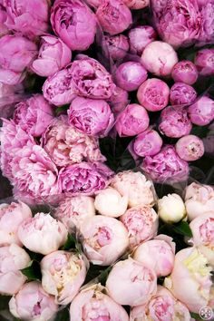 Blush pink and lavendar peonies are floral perfection