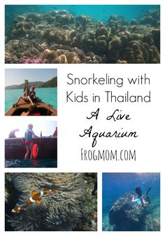 If your family likes aquariums, snorkeling with kids in Thailand will be a real treat and a wonderful way to discover marine ecosystems in the sea. Quick guide to 2 great destinations, including what to see, where to stay and which guides to hire.