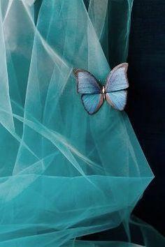 Mousseline et papillon