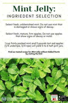 Learn more about preserving fresh herbs for use all year round by visiting the link! Preserve Fresh Herbs, Mint Jelly, Food Safety, Preserving Food, Red Apple, Preserves, Colorado, Poems, Link