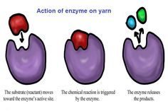 Enzyme Wash Process in Garments   Textile Merchandising