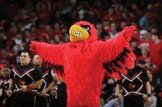 Louisville Cardinal Bird