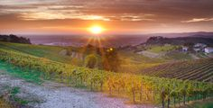 #sunset on #wineyards on the Euganean Hills (Padua, Veneto Region) #collieuganei