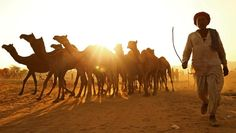 Pushkar Camel Fair Tour from Delhi - Quality and Value for Money, Custom made Private Guided, All India Tour Packages by Indus Trips - India's Leading Travel Company International Flights, India Tour, Hindu Temple, Travel Companies, Sufi, Pilgrimage, Livestock, The Magicians, The Locals