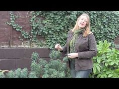 Euphorbia Plant Care – Watering, Pests, Fertilizer, Propagation and Soil