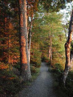 Slapfoot Trail (Kejimkujik National Park, Nova Scotia) by Dave Murray cr. Park Trails, Hiking Trails, Get Outdoors, The Great Outdoors, Nova Scotia Travel, Places To Travel, Places To Go, Go Glamping, Camping