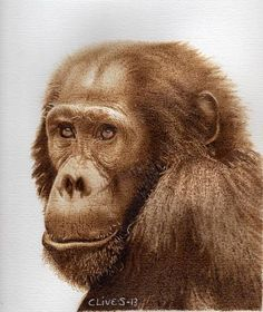 Chimp Pyrography on Paper. Clive Smith.