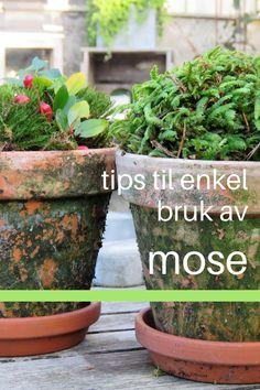 Her gir jeg deg tips til bruk av mose: På høsten og før frosten er her, går jeg gjerne en tur i Fredrikstadmarka eller i skogen rundt her jeg bor for å plukke med meg den fineste mosen. #mose #diy #gjørdetselv #hagetips #juledkorasjoner Gardening Tips, Planter Pots