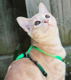 http://www.katespetcorner.com/2013/08/how-to-keep-indoor-cat-happy-healthy.html