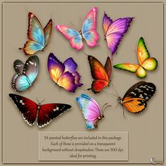 Flutter: The butterfly collection contains 24 brightly colored hand-painted butterflies that you will use again and again! Butterfly Drawing, Butterfly Painting, Butterfly Crafts, Butterfly Wings, Butterfly Colors, Art Papillon, Painted Rocks, Hand Painted, Bild Tattoos