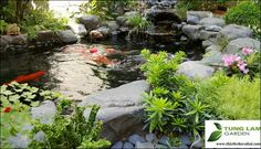 Hồ cá Koi vườn đào đẹp