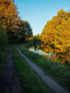 A trail and stream in the fall (autumn) in rural Belgium.