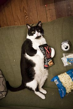 Damn. … no comment man. … #But that cat has more meat on its bones than my 7-year-old little sister!!! :/