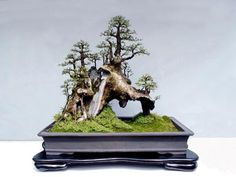 Image from http://www.artofbonsai.org/feature_articles/images/penjing_renaissance/small/penjing_fig_1.jpg.