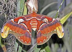 exotic butterflies | Exotic butterflies flutter into town - Tucson Citizen Morgue, Part 1 ...