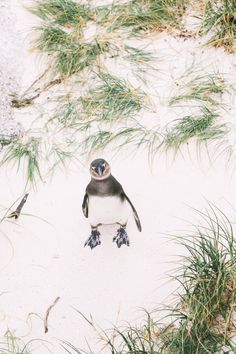 How To Visit Penguin Beach In South Africa (8)