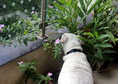 Pets forever: Time to smell the flowers