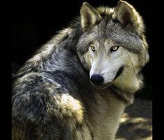 Buon inizio settimana ecoviaggiatori! http://blog.viaggiverdi.it/2014/05/lupo-asino-bosco-viaggiare-casentino-bambini/