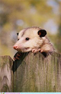 cute animals - Howdy Neighbor