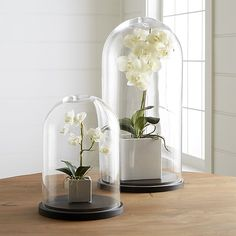 Shop Glass Cloches. Display plants, ornaments or collectibles under the clear glass dome of this lovely cloche.