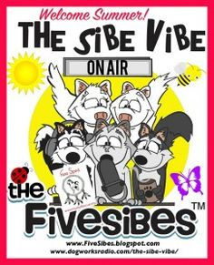 """FiveSibes """"The Sibe Vibe"""" with Free Spirit Siberian Husky Rescue!"""