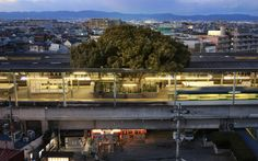 In the Northeast suburbs of central Osaka stands a curious train station unlike any other. Kayashima Station features a rectangular hole cut into the roof of the elevated platform and, from inside, a giant tree pokes its head out like a stalk of broccoli. Giant Tree, Colossal Art, Old Trees, Sustainable Design, Japanese, Outdoor, Mansions, House Styles, Building
