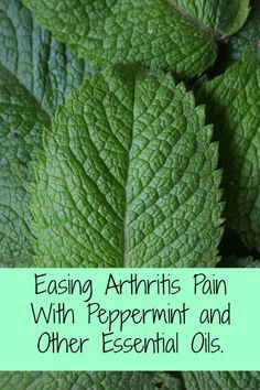 How essential oil blends can ease arthritis pain, since they contain natural…