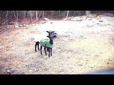 Screaming Sheep Facebook: http://www.facebook.com/TheScreamingSheep      Leave this playlist looping on random computers: http://www.youtube.com/watch?v=SIaFtAKnqBU=PLNFCCyDwrwGBTX4gm8g8wy8VVr_Cg5eu8=1