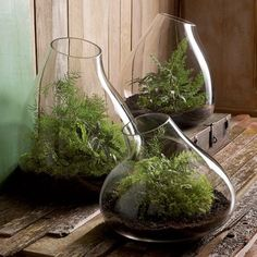 Recycled Glass Terrarium - contemporary - indoor pots and planters - SPROUT HOME